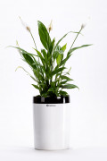 Flower pot Calimera B2 black white