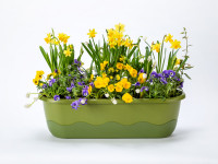 Flower box Mareta green