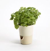 Flower pot Rosmarin beige
