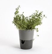 Flower pot Rosmarin grey