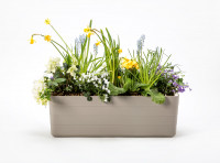 Flower box Berberis grey beige
