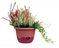 Flower pot Mareta pink wine red