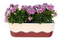 Flower box Mareta beige wine red