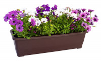 Flower box Bergamot brown