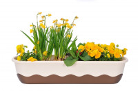 Flower box Mareta beige bronze